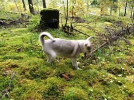 Karelia Adventure Naava